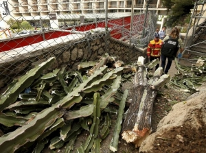 1 dead  and 4 wounded after fall of heavy cactus in Monaco